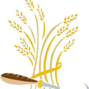 Bread-Wheat